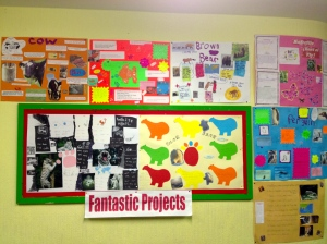 Our Animal Projects