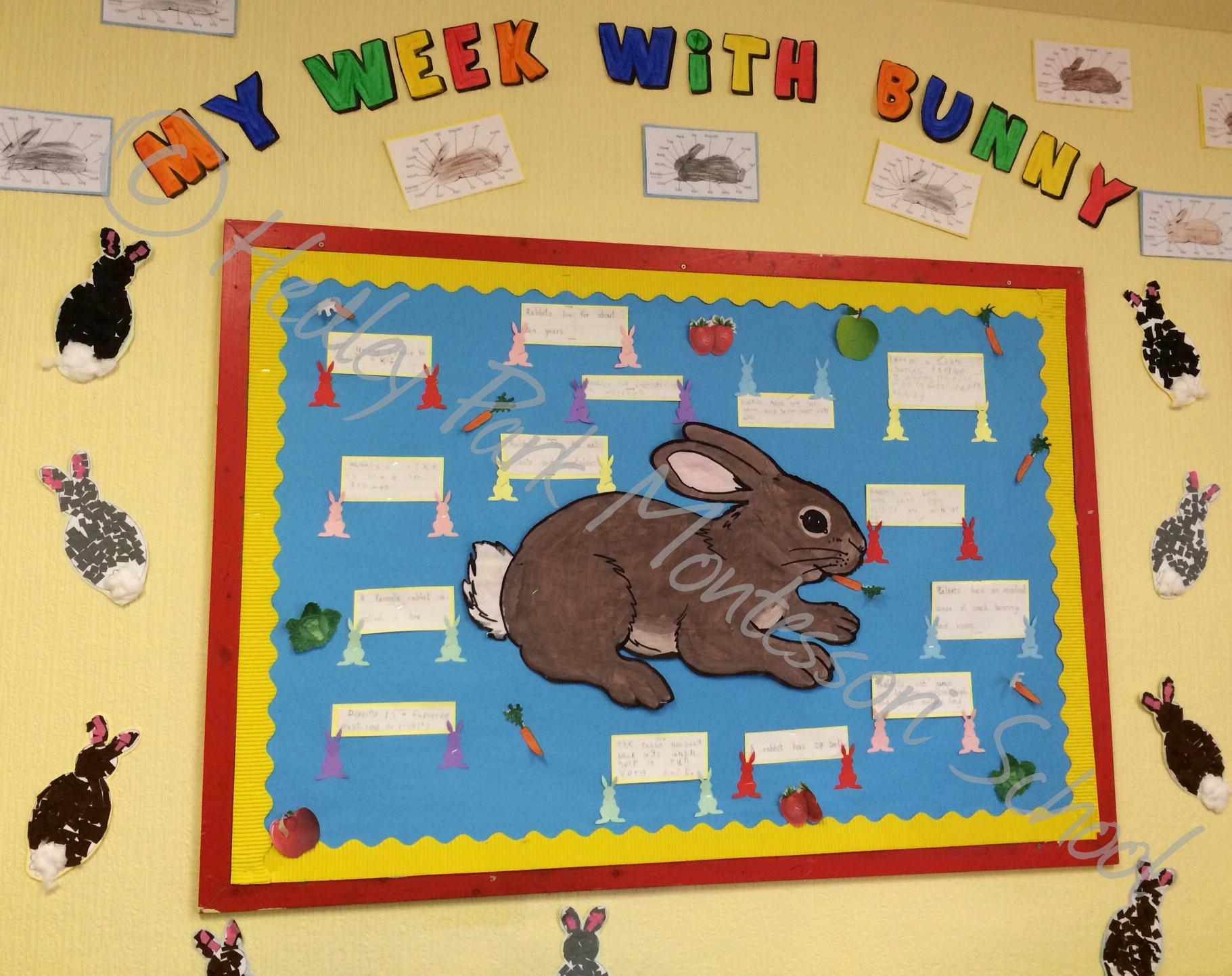 Junior Class My Week With Bunny Display