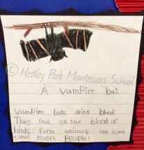 Junior Class - Writing sample about Bats